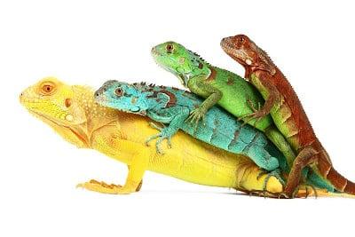 ReptileTalk Intro