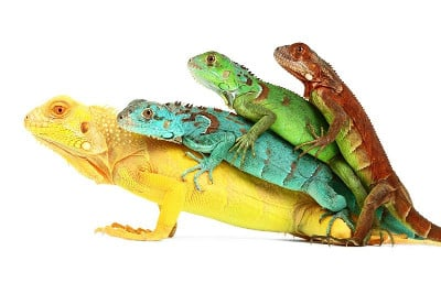 ReptileTalk