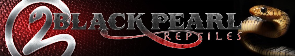 BlackPearl Reptiles