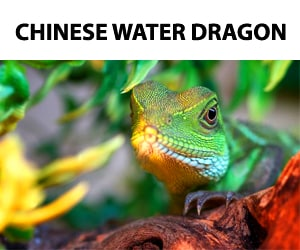 Chinese Water Dragon FB Page