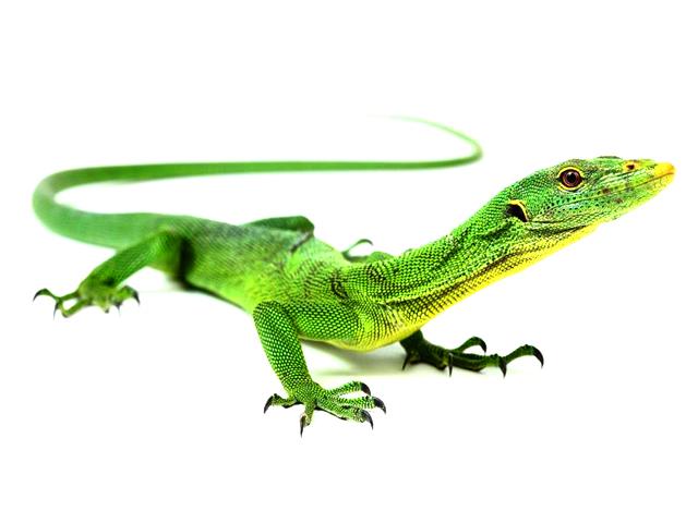 Emerald Monitor