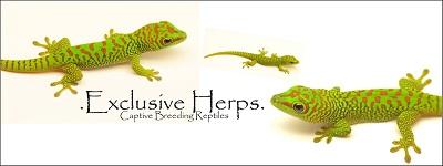 Exclusive Herps GDG