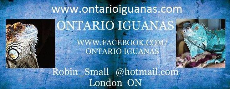 Ontario Iguana