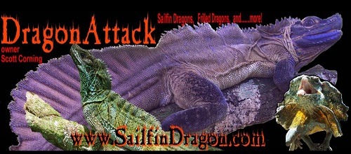 SailfinDragon