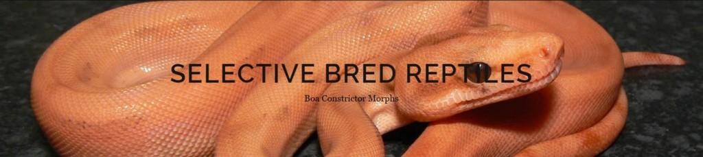 Selective Bred Reptiles