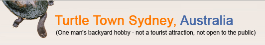 Turtle Town Sydney