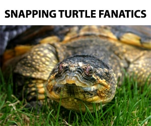 Snapping Turtle Fanatics