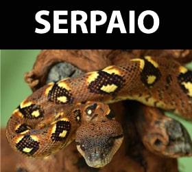 Serpaio