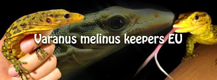 Varanus Melinus keepers EU