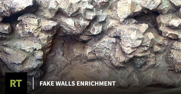 Fake Walls Enrichment