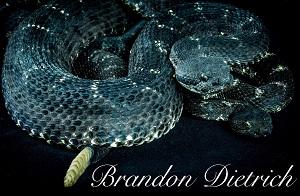Brandon Dietrich