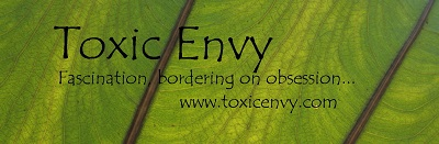 Toxic Envy