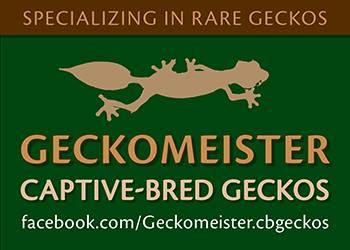 Geckomeister Captive-bred Geckos