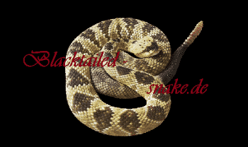 Blacktailed-snake DE