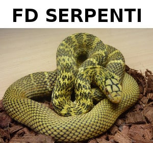 FD Serpenti