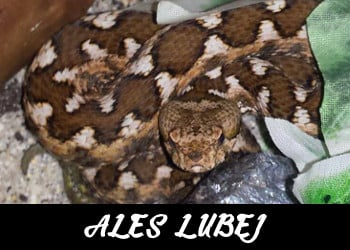 Ales Lubej