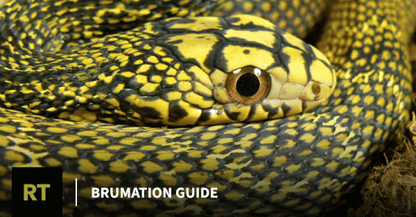 Brumation Guide