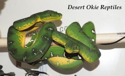 Desert Okie Reptiles