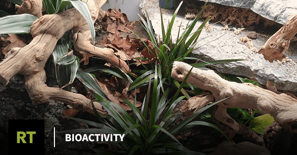 Bioactivity