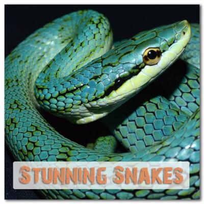 Stunning Snakes